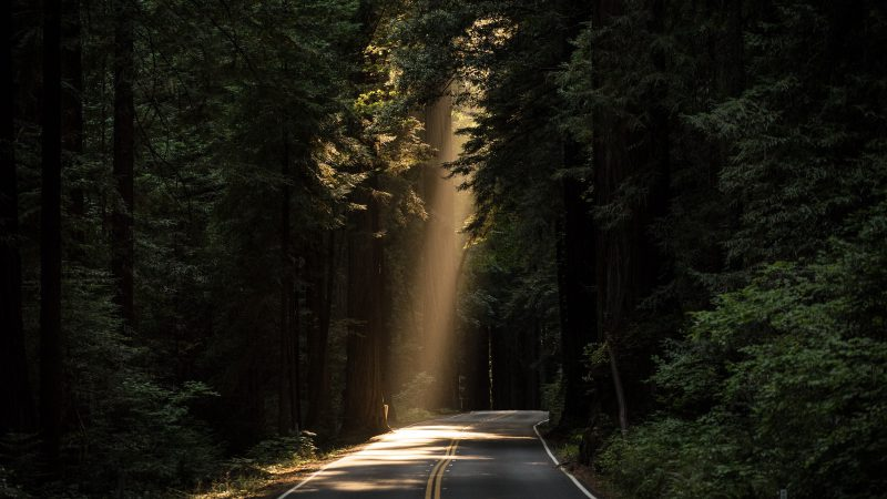 Sun, ray of light, forest, trees